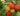 arbutus-unedo-erdbeerbaum-erdbeerstrauch (1)